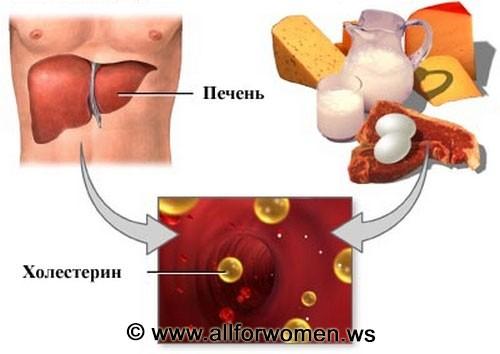 Откуда появляется холестерин