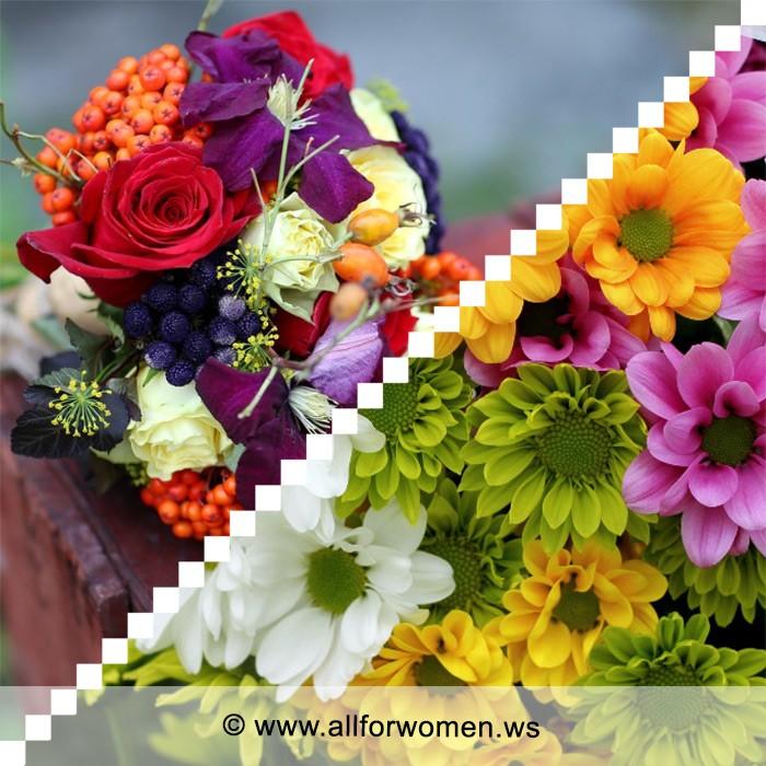 Чудесная хризантема