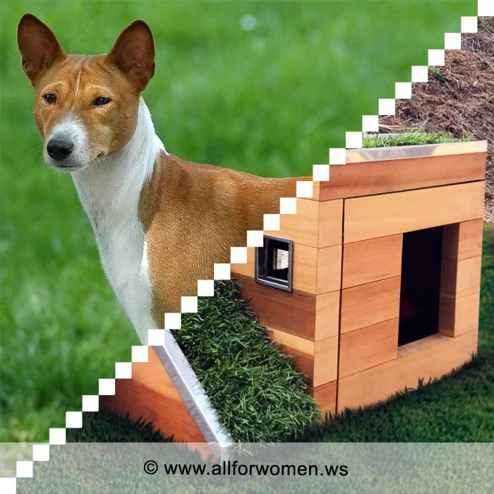 Будка для собаки: советы при выборе