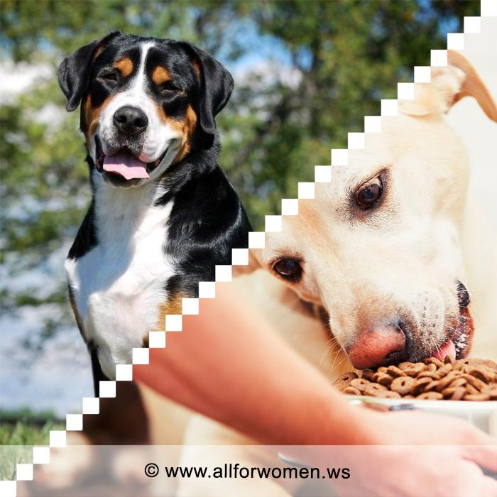 Чем кормить собаку и как