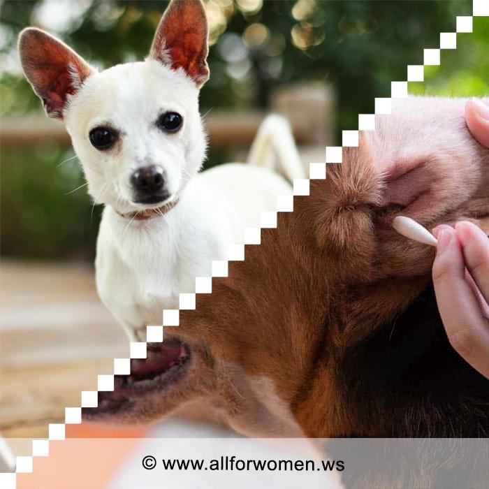 Чем лечить уши собаке и как ухаживать