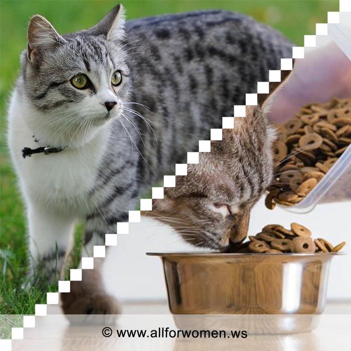 Как правильно и чем кормить кошку