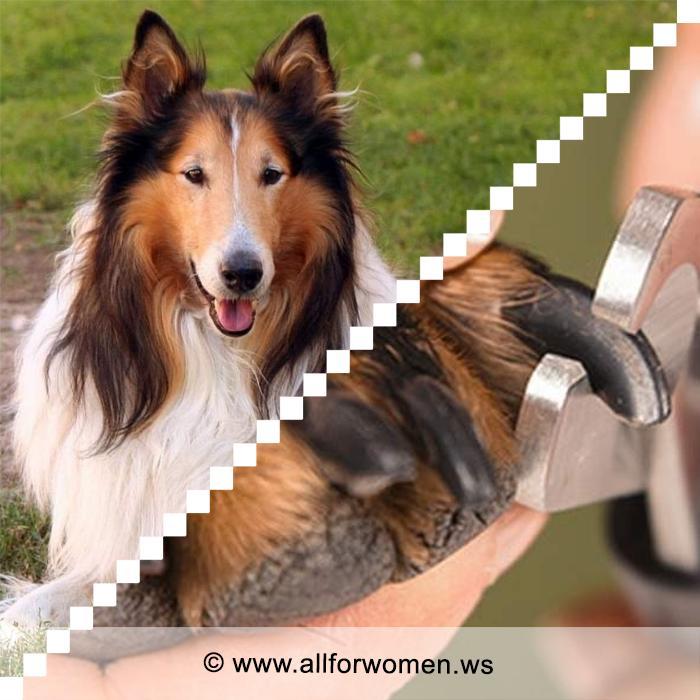 Как стричь когти собаке и уход за лапами