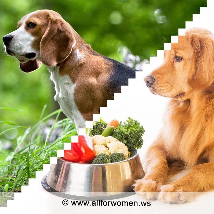 Правильное кормление собаки