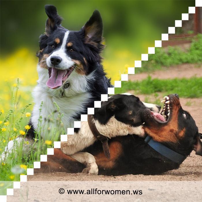 Собачья драка и как её избежать