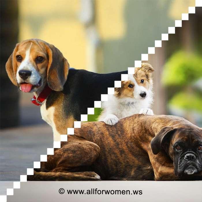 История про собак