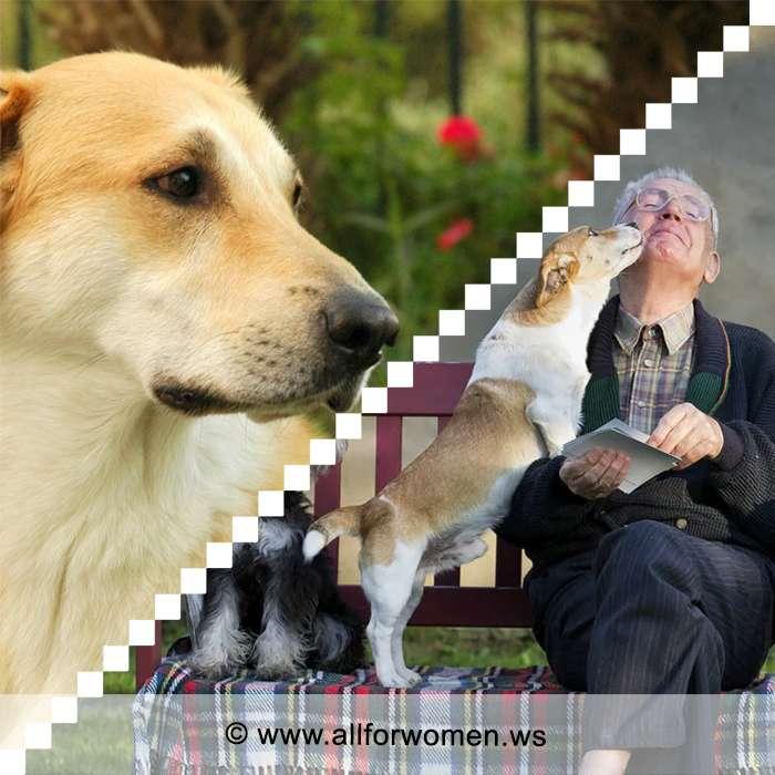 Как собаки помогают людям преклонного возраста