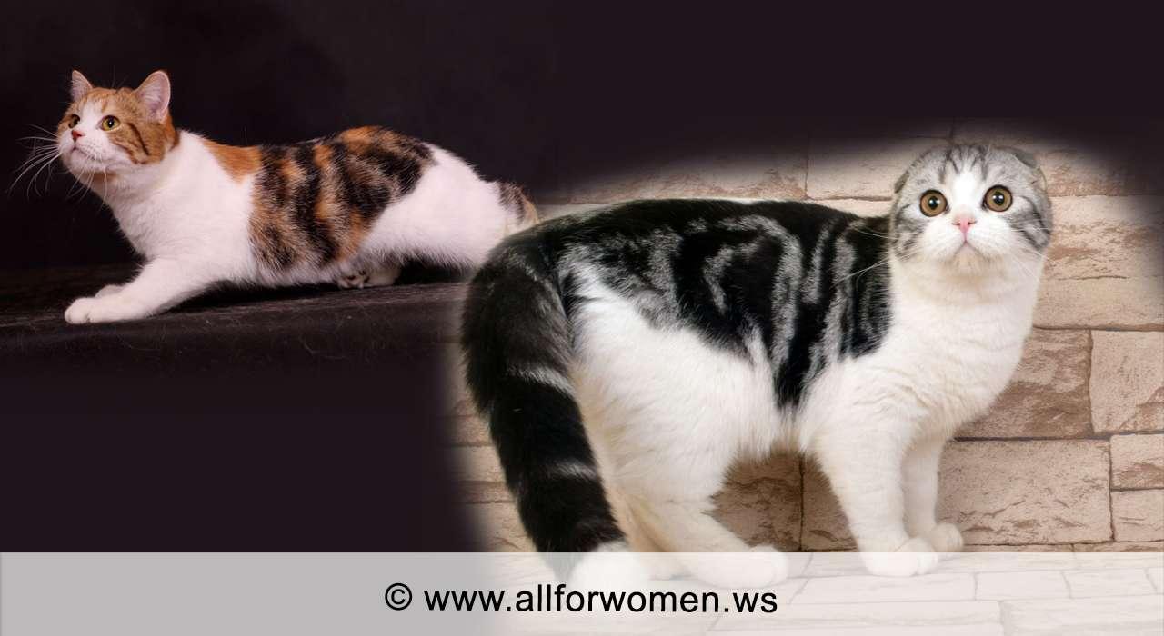 Кошка серого цвета и двухцветная - особенности - трёхцветные