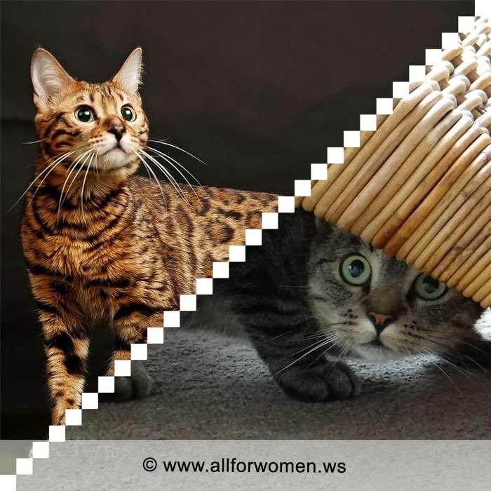 Отношение кошки к человеку