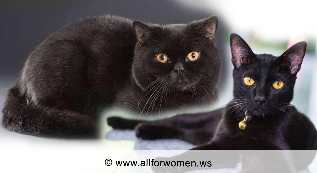 Кошки рыжего цвета и чёрного окраса - черные