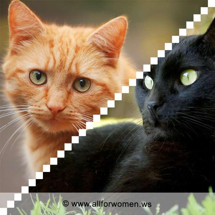 Кошки рыжего цвета и чёрного окраса